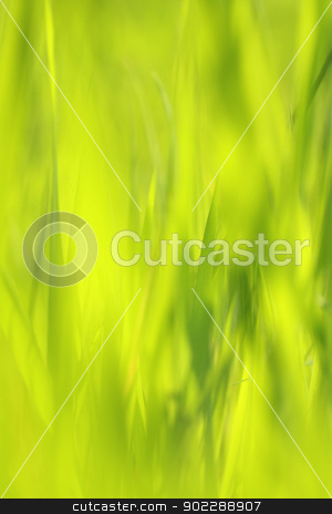 Beautiful Spring grass background stock photo, Beautiful Springtime grass close up background by Juliet Photography