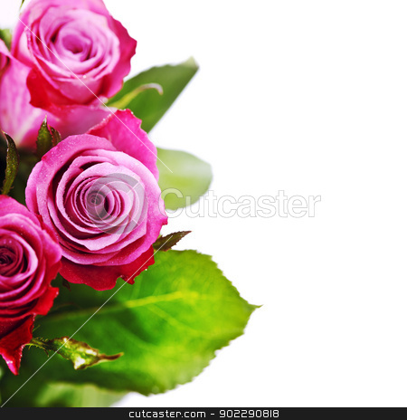 pink roses stock photo, pink roses with water droplets on white background by klenova