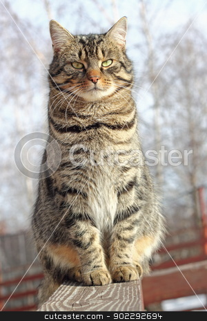 cat on a fence stock photo, cat relaxing on a wooden fence in a cold day by coroiu octavian