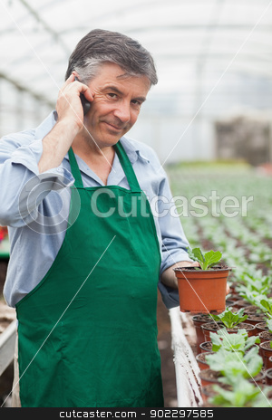 Assistant calling while holding a seedling stock photo, Assistant calling while holding a seedling in greenhouse by Wavebreak Media