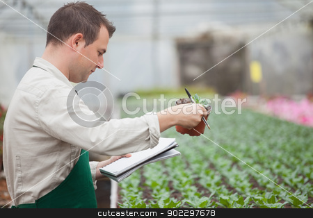 Man standing in greenhouse and taking notes stock photo, Man standing in greenhouse nursery and taking notes  by Wavebreak Media