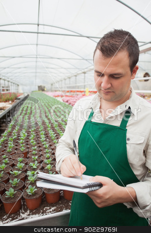 Greenhouse worker taking notes  stock photo, Greenhouse worker taking notes in seedlings in nursery by Wavebreak Media