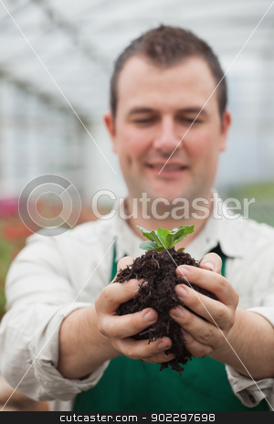 Gardener holding shrub about to plant stock photo, Gardener holding shrub about to plant in greenhouse by Wavebreak Media