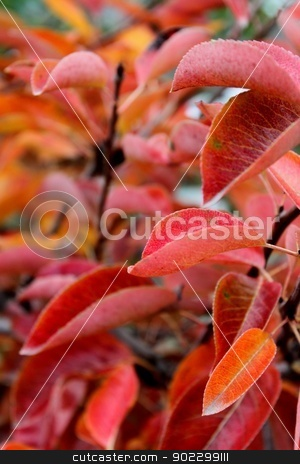 Red Leaves stock photo, Close up of red autumn leaves for background. by Henrik Lehnerer