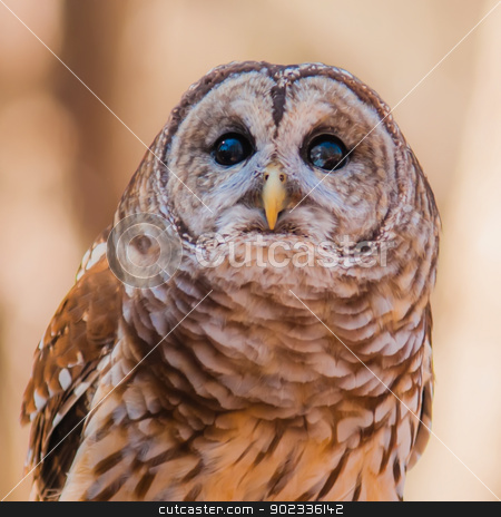 Owls are the order  stock photo, Owls are the order Strigiformes, constituting 200 extant bird of prey species. Most are solitary and nocturnal by digidreamgrafix.com