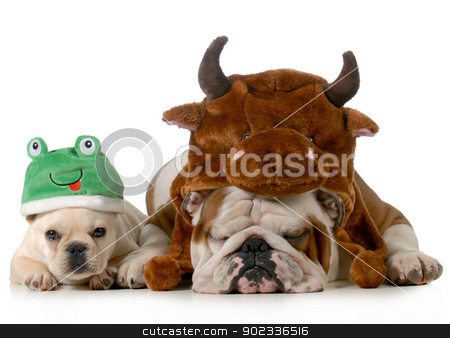 cute dogs stock photo, english bulldog and french bulldog dressed up like bull and frog isolated on white background by John McAllister