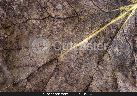 Almost Dead Leaf stock photo, A leaf found on the ground having just fell in Autumn by Christopher Boswell
