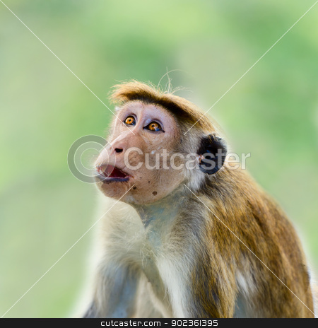 Wow! Cool! stock photo, Wow emotional expression on wild monkey face by Iryna Rasko