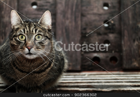 Portrait of a cat stock photo, Portrait of a cat at home by Nneirda
