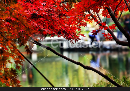 Maple Leaves Bridge West Lake Hangzhou Zhejiang China stock photo, Autumn Maple Leaves Bridge West Lake Hangzhou Zhejiang China by William Perry