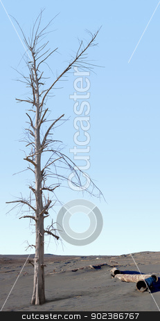 Dead tree in the zone of ecological disaster stock photo, Dead tree in the area of ​​environmental disaster by Alexey Romanov