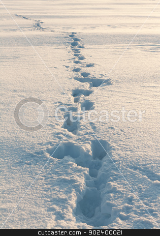 footprints in the snow stock photo, footprints in the snow stretching into the distance by Ruslan Kudrin