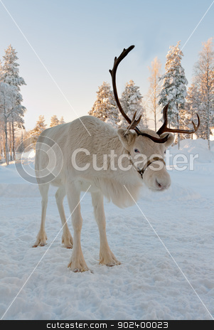 Christmas reindeer stock photo, White Christmas deer in the background of snow-covered forest by Ruslan Kudrin