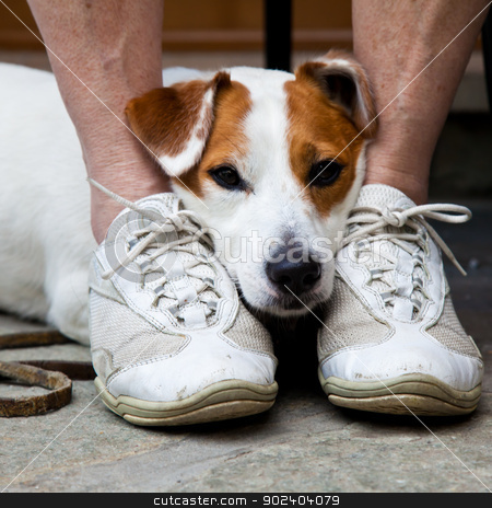 Cute dog looking for protection stock photo, Young, cute dog looking for protection through the legs of his by Perseomedusa