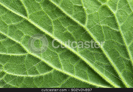 leaf texture stock photo, structure of leaf natural background by Vitaliy Pakhnyushchyy