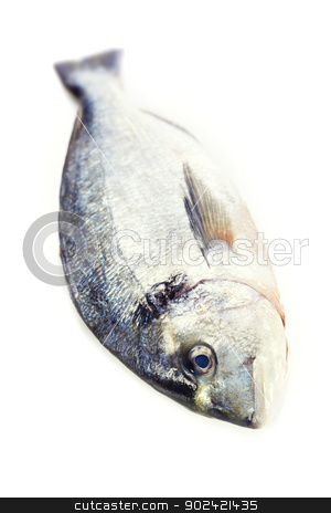 fresh dorada fish stock photo, fresh dorada fish over white - food and drink by klenova