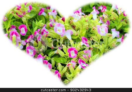flower in garden under sunshine