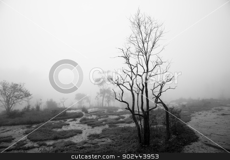 Mist. stock photo, Mist at Khao Kho is the national park of Phetchabun Province, Northern Thailand. by narathorn