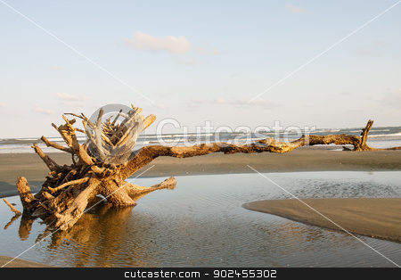Driftwood Pointing Toward Ocean stock photo, Driftwood on a deserted beach in late afternoon sun by Darryl Brooks