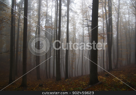 misty stock photo, Shot of the misty forest by Siloto