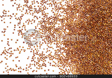 red quinoa grain stock photo, red quinoa grain spread on white background with backlight - top view by Marek Uliasz
