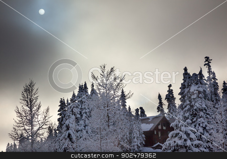 Sun Fog Snow Covered Evergreen Trees Abstract at Snoqualme Pass  stock photo, Sun Fog Snow Covered Trees on Snow Mountain at Snoqualme Pass Washington. by William Perry