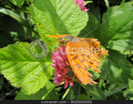 buterfly stock photo,  by roarphotography