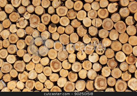 firewood stock photo, Steres for logs cut in fuel wood for renewable by Cochonneau
