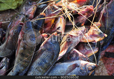 Raw fish  stock photo, River fish for sale in Asian countryside by Hang Dinh