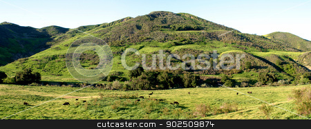 Green Valley stock photo, Green valley with cows as a panorama. by Henrik Lehnerer