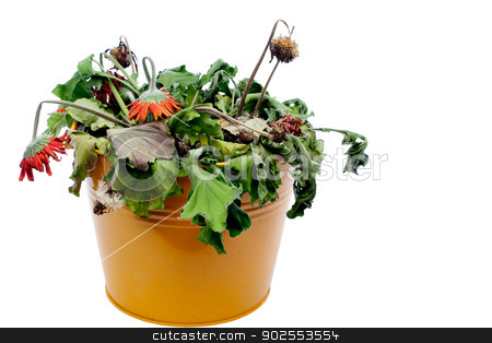 Horizontal image of dead flowers stock photo, Horizontal image of dead flowers by Vince Clements