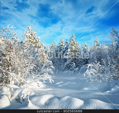 Trees in winter forest covered with hoarfrost and snow stock photo, Trees in northern forest covered with hoarfrost and snow by Alexey Romanov