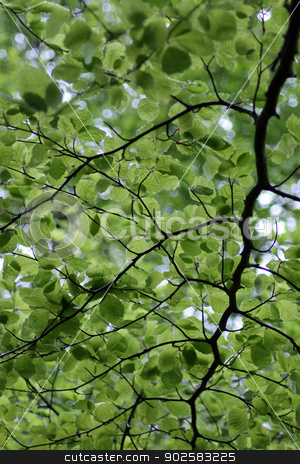 Green leafy background stock photo, Underside view of leafy green branches on tree. by Martin Crowdy