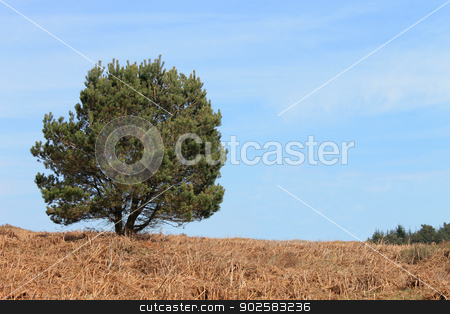 Green tree in countryside stock photo, Lone leafy green tree in countryside with moorland in foreground. by Martin Crowdy