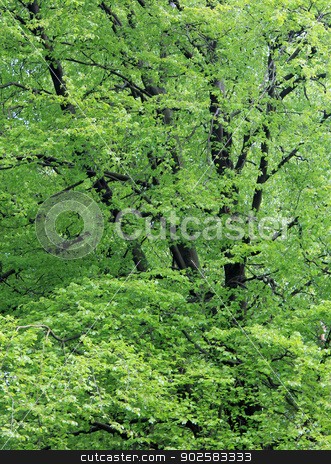 Leafy green trees stock photo, Background of leafy green trees in wood or forest. by Martin Crowdy
