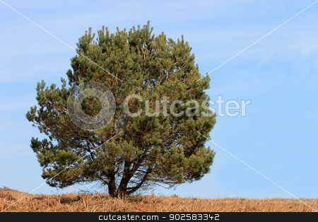 Lone tree in countryside stock photo, Lone tree in countryside with blue sky background. by Martin Crowdy