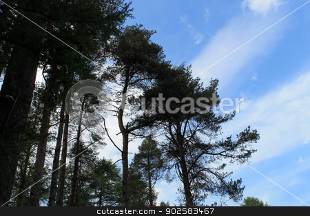Silhouetted trees stock photo, Silhouetted leafy trees with blue sky and cloudscape background. by Martin Crowdy