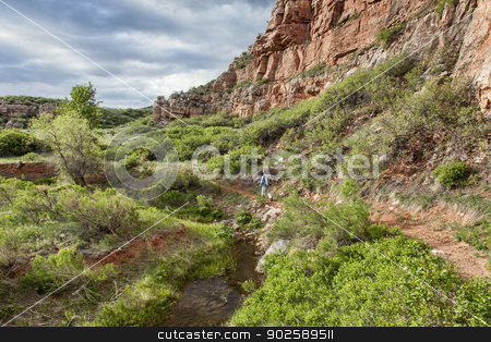 canyon hiker stock photo, senior male backpacker hiking through sandstone canyon with a stream and green lush vegetation, Red Mountain Open Space near Fort Collins, Colorado by Marek Uliasz