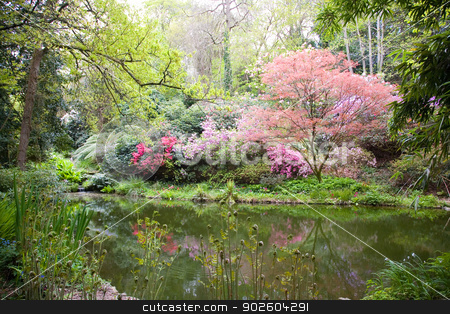 Blooming trees in the nature stock photo, Blooming trees in the nature during spring by Laurent Renault