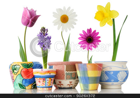 Colorful spring flowers in fun ceramic containers  stock photo, Colorful spring flowers in fun ceramic containers  by photomyheart