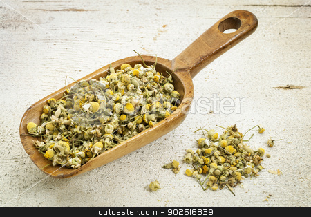 scoop of chamomile herb tea stock photo, organic chamomile herbal tea - rustic wooden scoop and a pile on rough white painted barn wood by Marek Uliasz