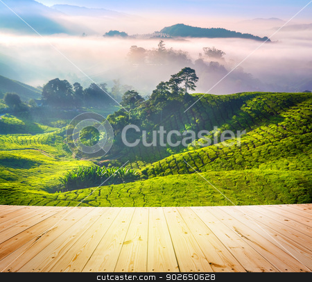 Tea Plantations stock photo, Wood floor over tea Plantations at Cameron Highlands Malaysia. Sunrise in early morning with fog. by szefei
