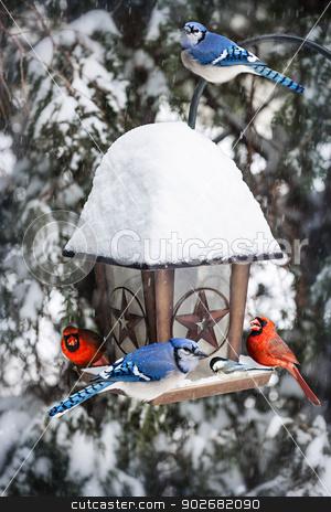 Birds on bird feeder in winter stock photo, Bird feeder in winter with blue jays and cardinals by Elena Elisseeva