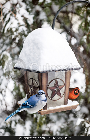 Birds on bird feeder in winter stock photo, Blue jay and cardinal birds on bird feeder in winter by Elena Elisseeva