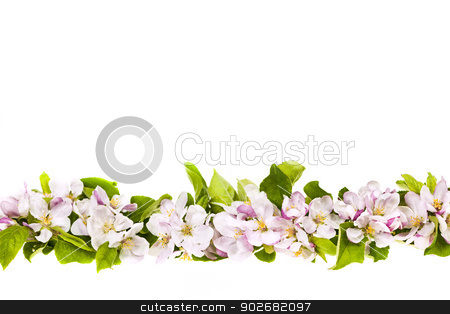 Pink apple blossoms border stock photo, Border of pink apple blossoms row isolated on white background by Elena Elisseeva