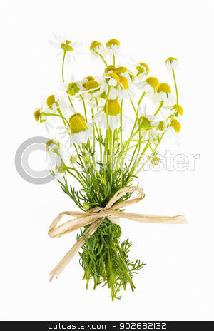 Chamomile flowers on white stock photo, Bouquet of wild chamomile flowers tied with bow isolated on white by Elena Elisseeva