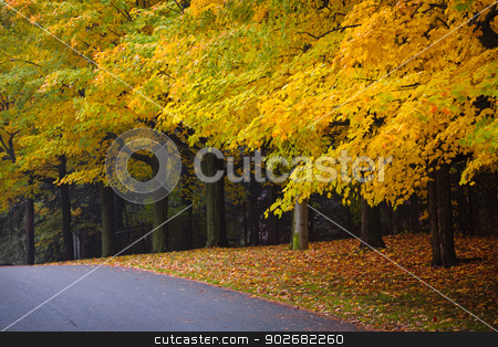 Fall road with colorful trees stock photo, Autumn street with fall maple trees displaying colorful foliage. Toronto, Canada. by Elena Elisseeva