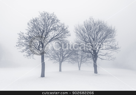Winter trees in fog stock photo, Winter scene of leafless trees in fog by Elena Elisseeva