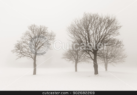 Winter trees in fog stock photo, Winter scene of leafless trees in fog sepia tone by Elena Elisseeva