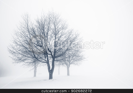 Winter trees in fog stock photo, Winter scene of leafless trees in fog with copy space by Elena Elisseeva